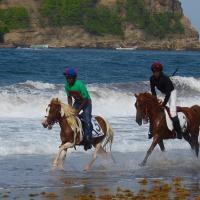 Course de poneys